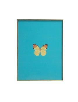 FRAMED BUTTERFLY PRINT - BLUE GREEN