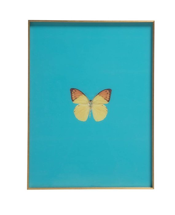 FRAMED BUTTERFLY PRINT IN TURQUOISE