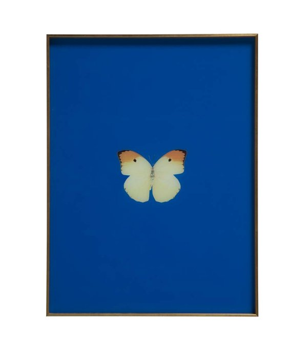 FRAMED BUTTERFLY PRINT IN ROYAL BLUE