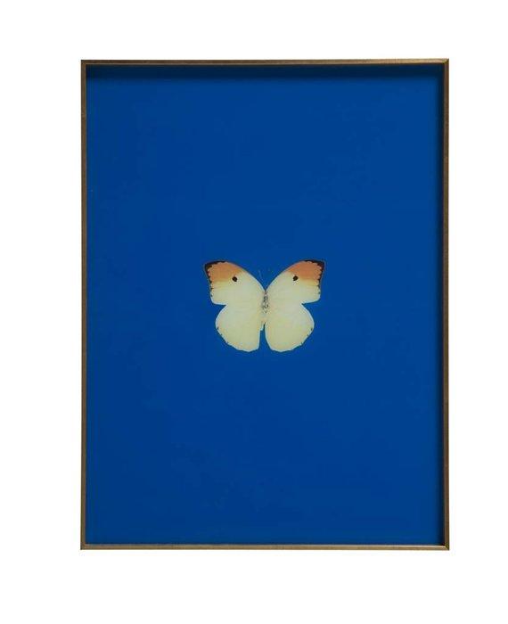 FRAMED BUTTERFLY PRINT - ROYAL BLUE
