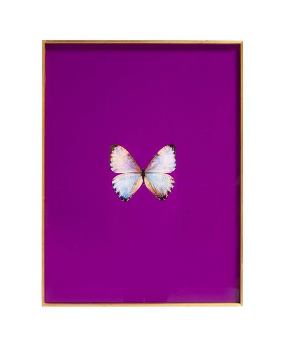 FRAMED BUTTERFLY PRINT IN MAGENTA