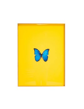 FRAMED BUTTERFLY PRINT IN YELLOW