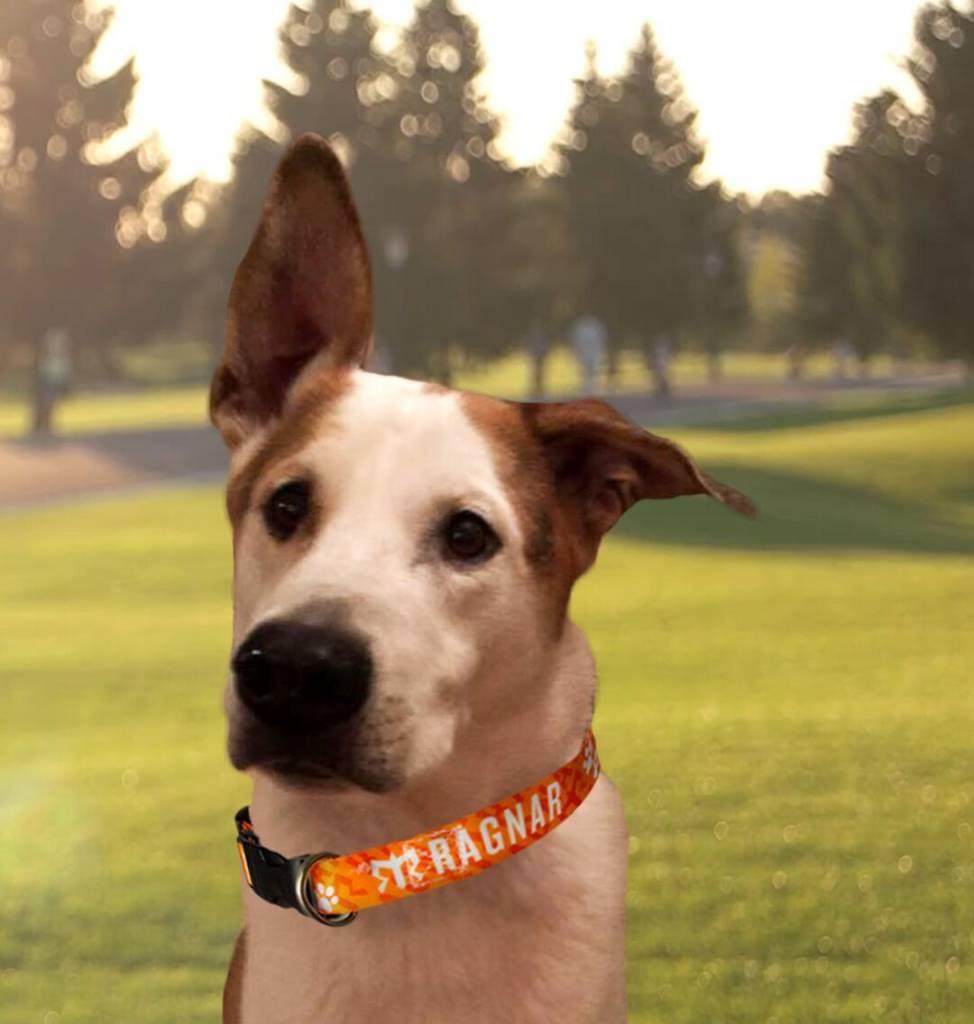 Ragnar Adjustable Pet Collar