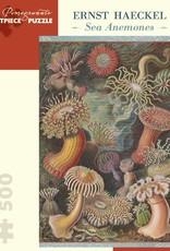 AA993 Ernst Haeckel - Sea anemones