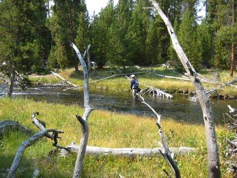 Fly fish Yellowstone National Park
