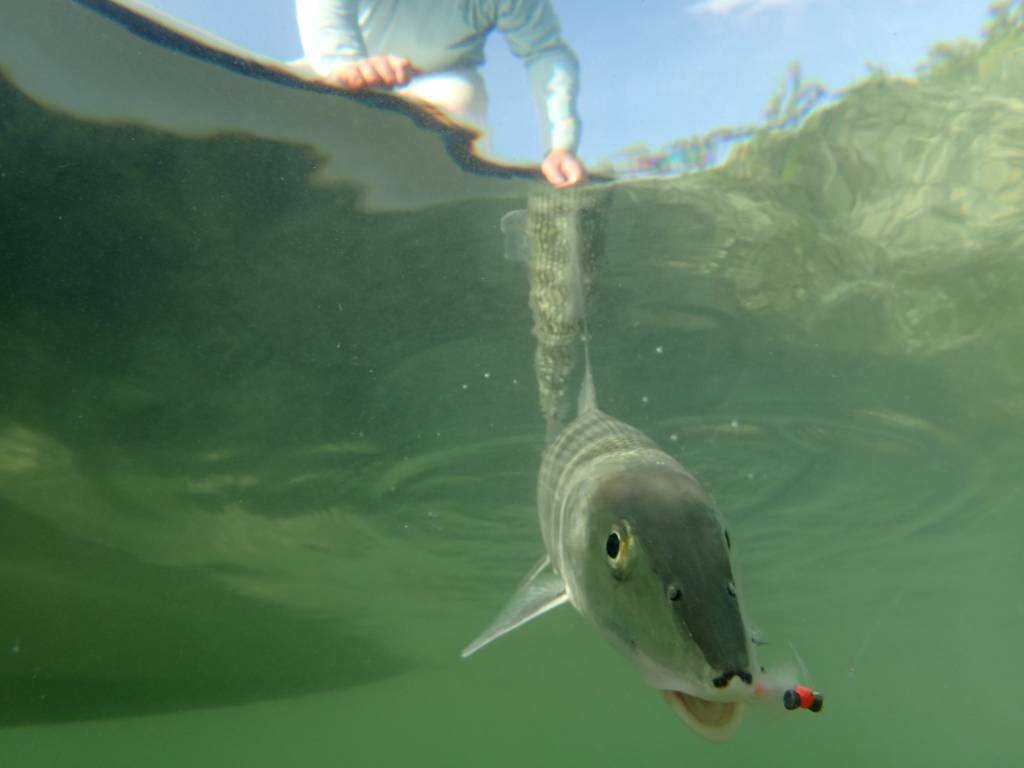 Saltwater Fly Fishing Trip with Gallatin River Guides