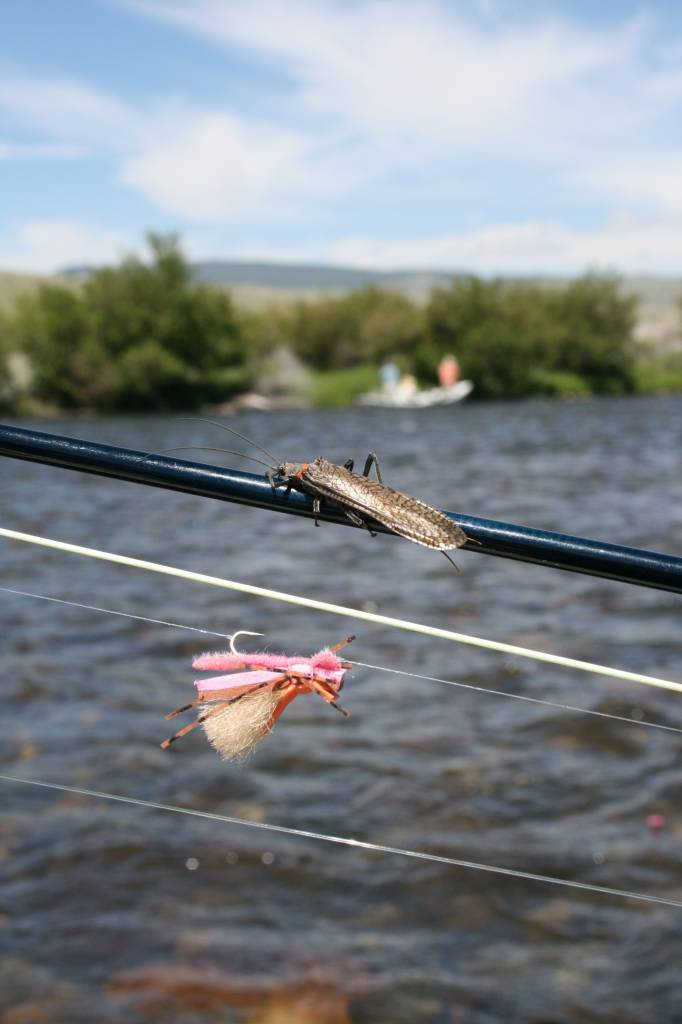 Big sky montana fly fishing trips and bozeman montana fly for Bozeman mt fly fishing