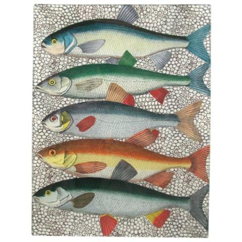 Fish Tray