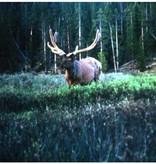 Vintage Bull Elk in Velvet