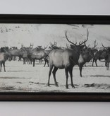 Large Elk Herd Print *CS*