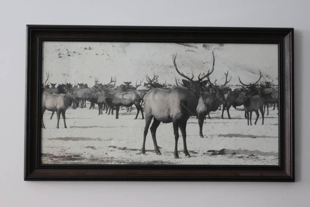 Large Elk Herd Print *CS*