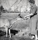 Julia's Deer
