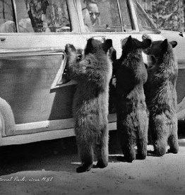 3 Bears 1958 Canvas Print