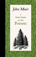 A Wind Storm in the Forest