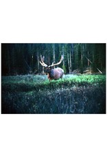 Vintage Bull Elk in Velvet, Hukel (24x36)