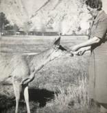 Julia's Deer, Molly
