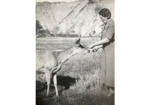 Molly Merica | Julia's Deer