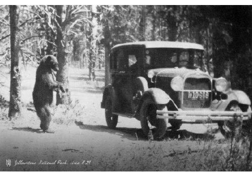 Molly Merica | One Bear 1929