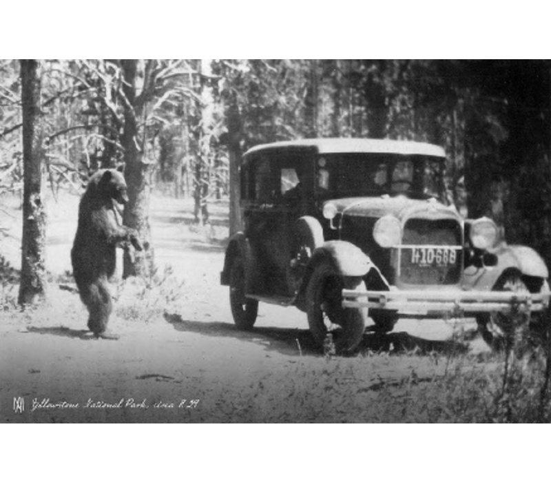 One Bear 1929, Molly