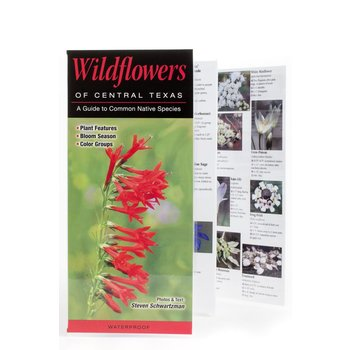 Lady Bird WILDFLOWERS OF CENTRAL TX GUIDE