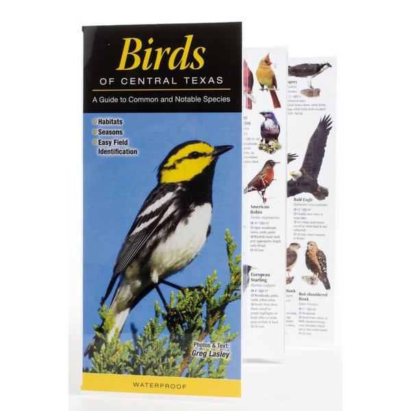 Lady Bird BIRDS OF CENTRAL TX GUIDE