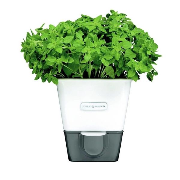 Self-Watering Herb Keeper