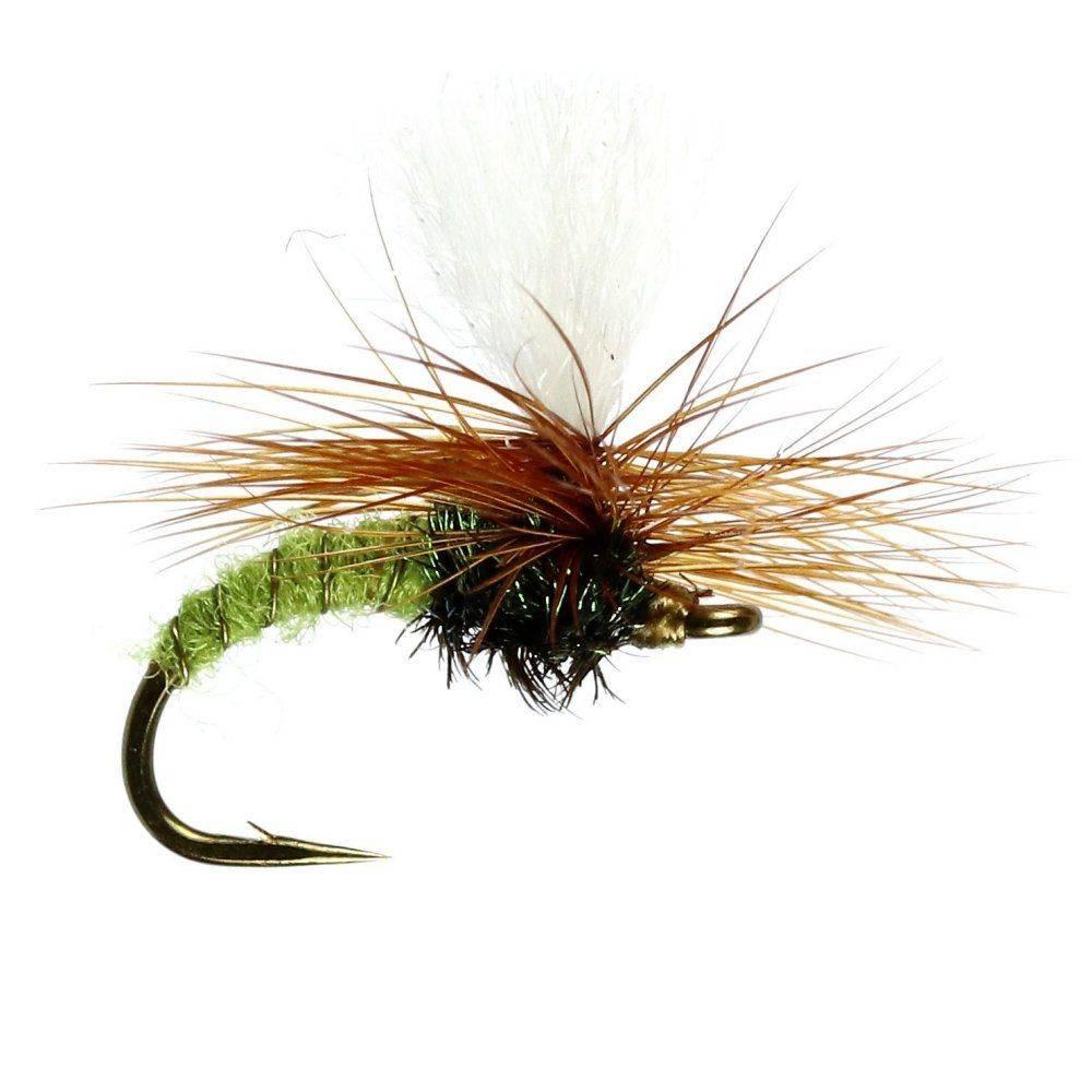 Olive Klinkhammer #14