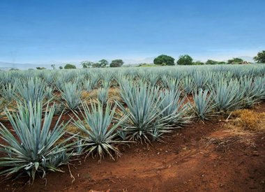 Tequila/Mezcal