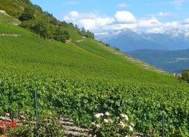 Jura/Savoie Wine