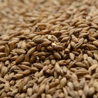 Great Western Malting 1 LB. Certified Organic 2 Row Malt, Great Western Malting