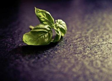 Herbs P-Q-R