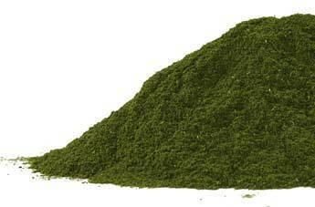 Wheatgrass powder CO  1oz
