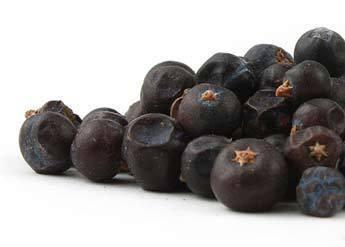 Juniper Berries CO whl  1oz