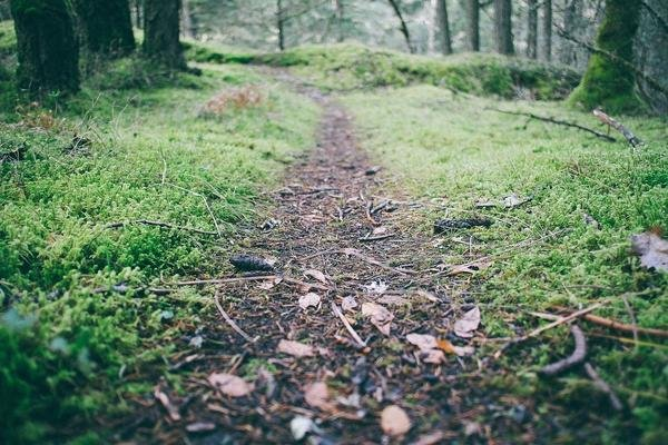 Appalachian Trail Series.1