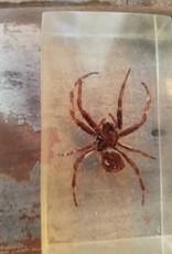 Resin W/ Bugs
