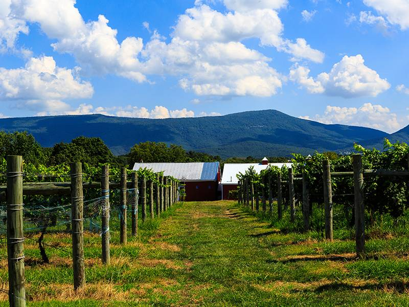 October is Virginia Wine Month