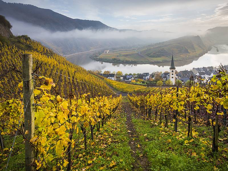Mosel, Climate Change, and Dr. Leimbrock