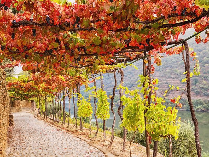 V Facts About Vinho Verde