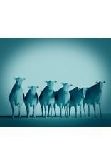 Joel E Hunt Joel E Hunt-Giclee Print-Cows