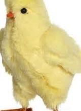 Mark Roberts Chicks