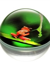 SPI Art Glass Rainforest Frog With Leaf Paperweight