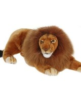 Male Lion Laying