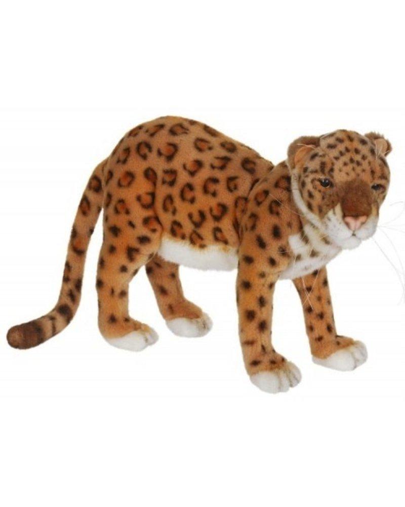 Anatolian Leopard