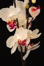 LIGHT WHITE ORCHID 31""""