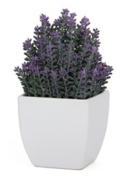 Torre & Tagus TAPERED CERAMIC POTTED LAVENDER - SMALL