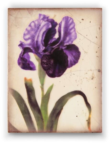 Sid Dickens Iris Royale