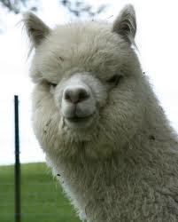 Crescent Moon Alpaca Wool Mattress Topper Queen