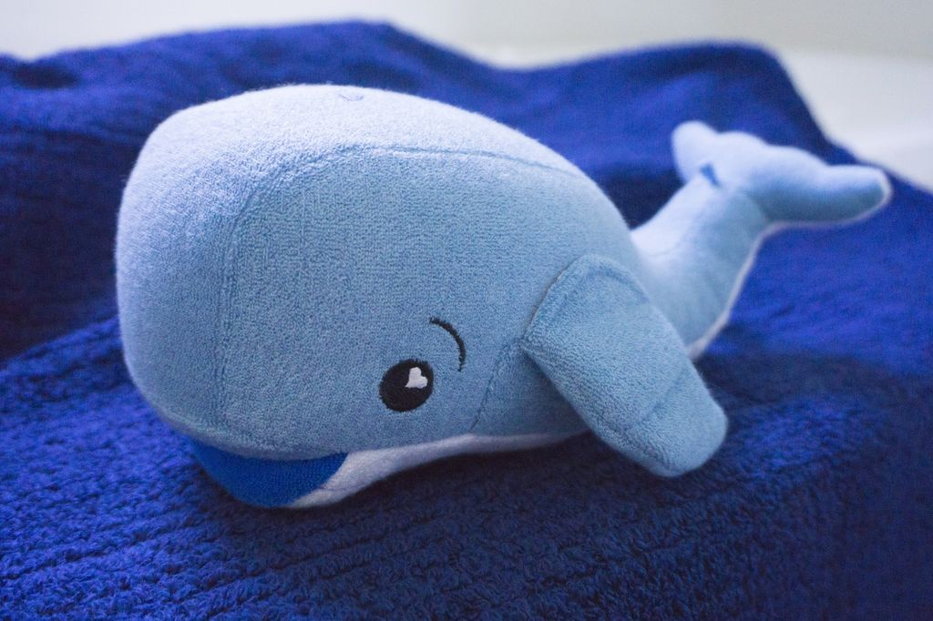 bath jackson the whale