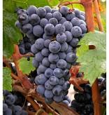 Wine Grapes Presale Reservation: Cabernet Franc