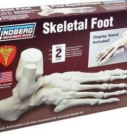 Lindberg (LND) Skeletal Foot Model Kit          **